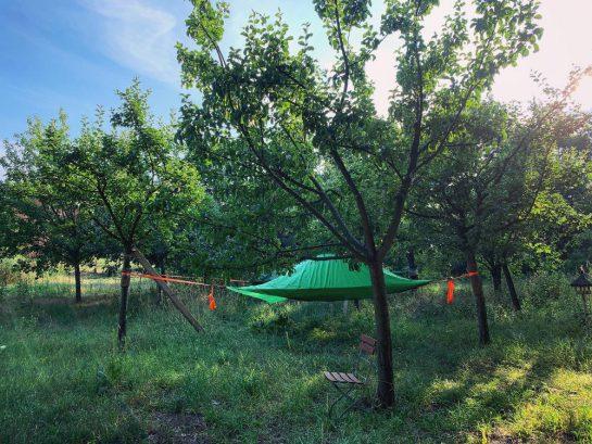 Zelt, aufgespannt zwischen Bäumen