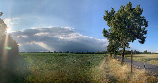 Panorama in Brandenburg: links die tief stehende Sonne, Maisfeld, rechts eine baumbestandene Straße