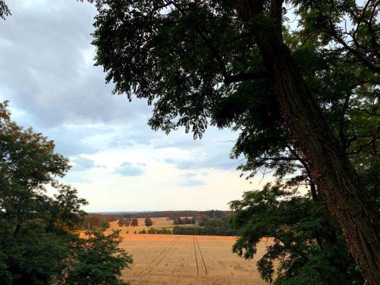 Blick vom Hügel hinunter auf gelbe Kornfelder
