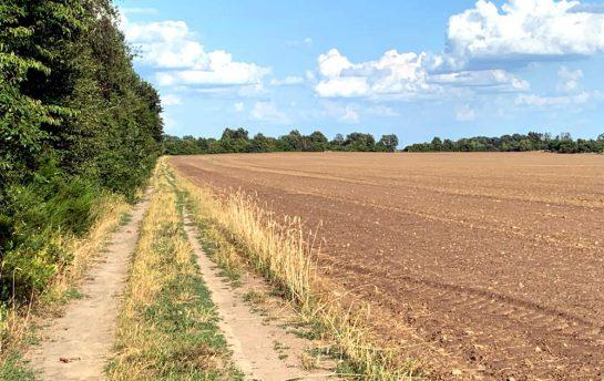 Weg, der an einem abgeernteten Feld entlangführt. Die Sonne scheint, blauer Himmel und kleine Wölkchen