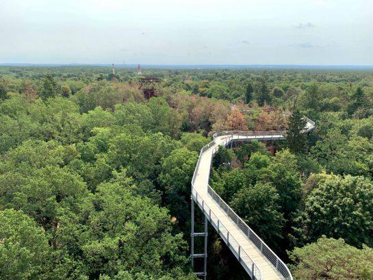 Baumkronenpfad aus der Höhe
