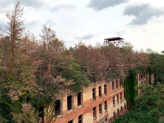 Das Alpenhaus der Beelitzer Heilstätten: Backsteinbau, verfallen, ohne Glas in den Fenster. Aus dem Dach wachsen Bäume