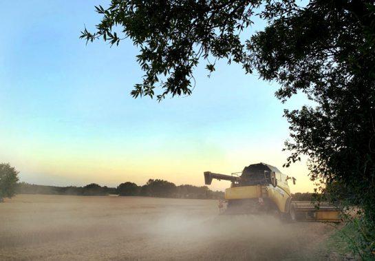 Mähdrescher in der Abendsonne