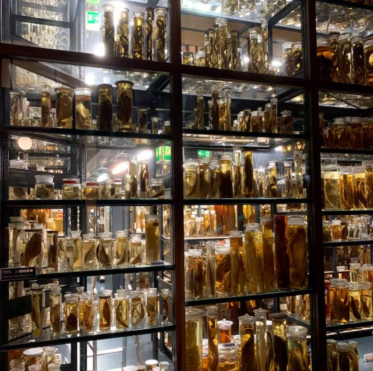 Naturkundemuseum Berlin: Raum mit eingelegten Fischen in Gläsern