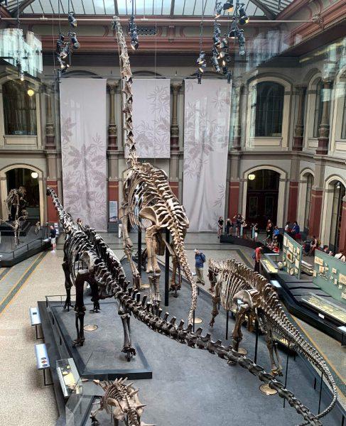 Naturkundemuseum Berlin, große Halle mit zwei Dinosauerierskeletten