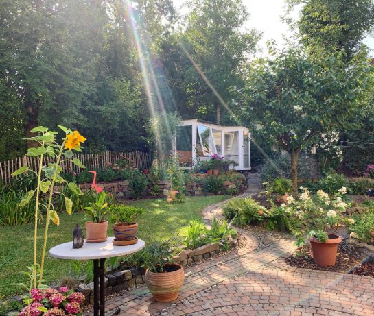 Blick von der Terrasse in den Garten: weißes Gewächshaus, davor ein Kirschbaum. Einfallende Sonne.