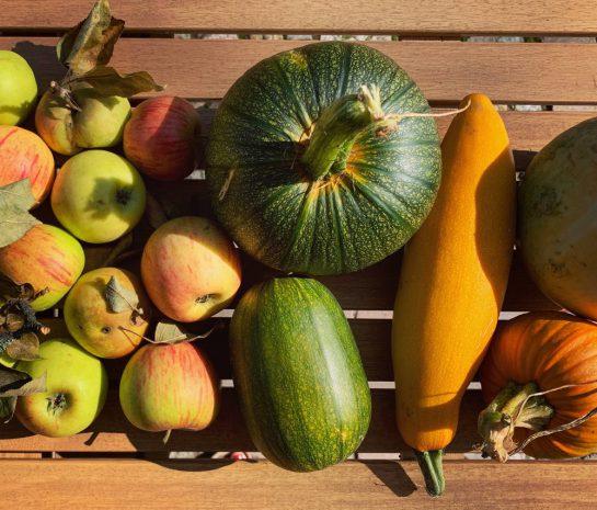 Äpfel, Zucchini, mehrere Kürbisse auf einem Tisch
