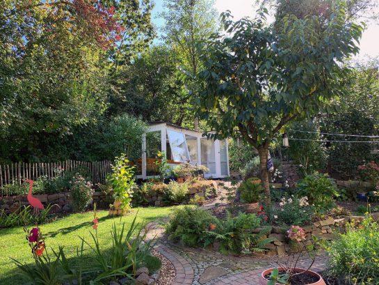 Blick in den Garten in Richtung eines weißen Gewächshauses, davor ein Kirschbaum