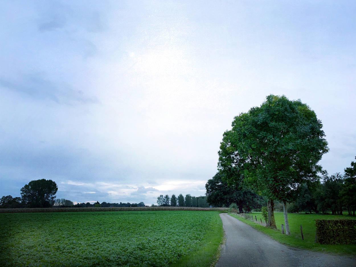 Landstraße mit einem Baum, links Felder. Trüber Himmel.
