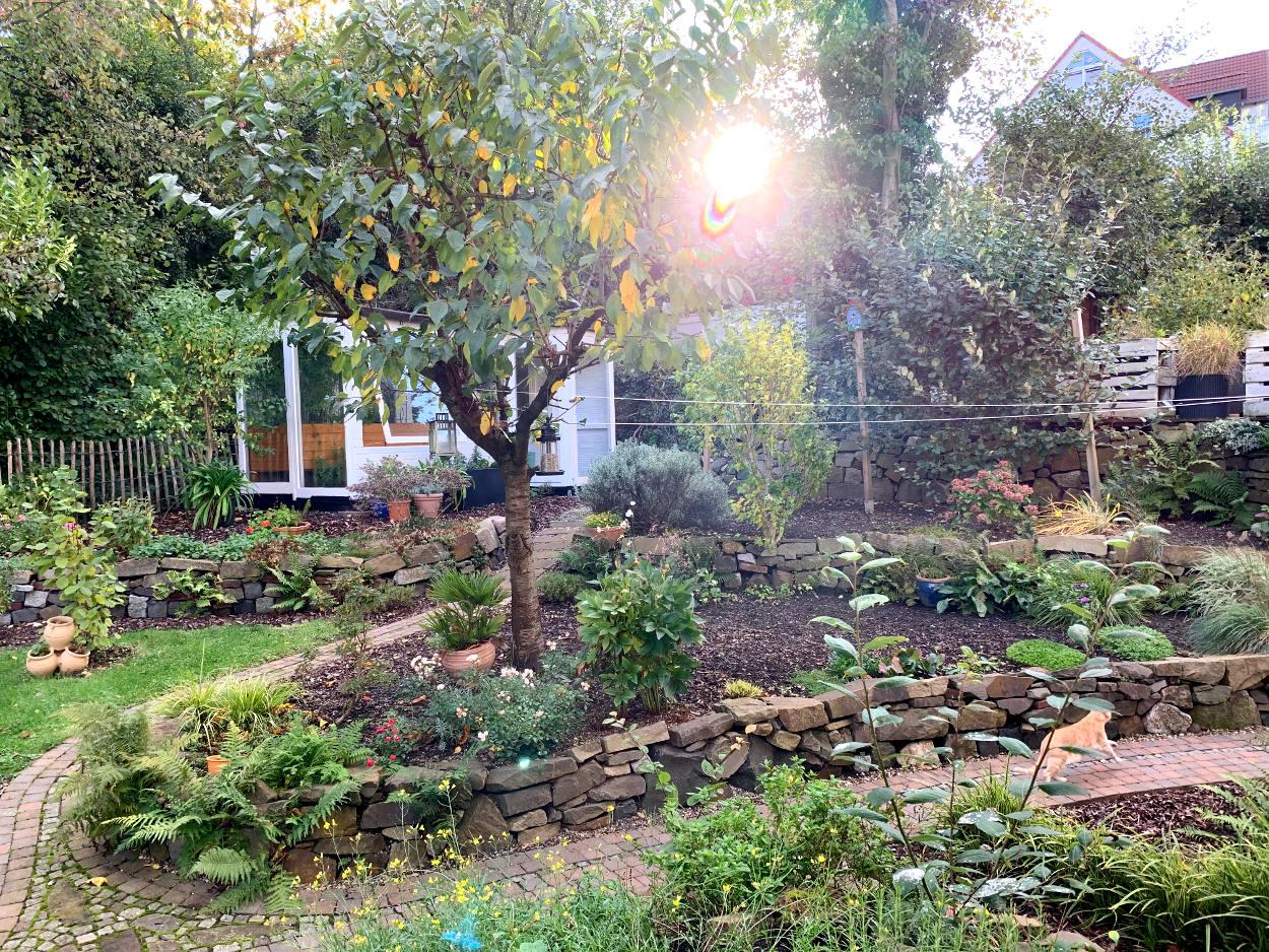 Herbstgarten. Die Sonne scheint durch die Blätter des gelb-grünen Kirschbaums. Eine rennende Katze durchquert das Foto.