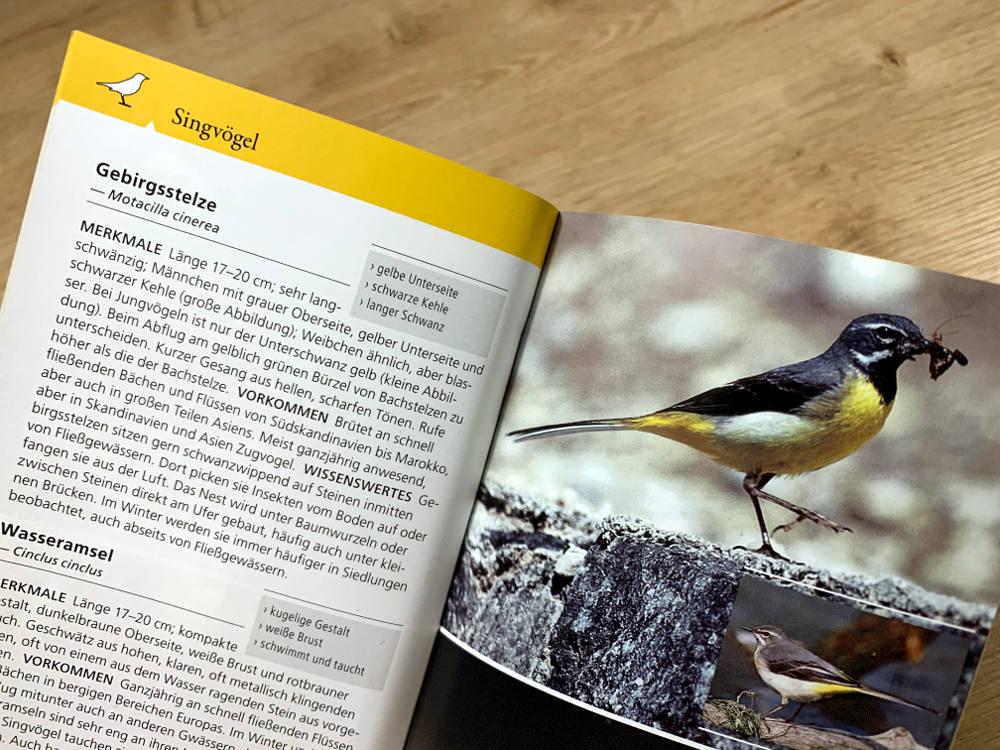 Seite im Vogelbestimmungsbuch: Bild des Tieres, daneben Text