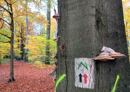 Baumstamm mit Pilzen, darauf ein Zeichen, dahinter Wald