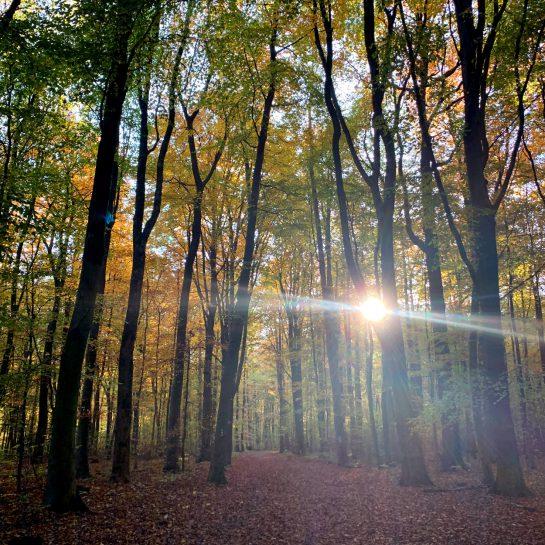 Herbstwald mit bunten Blättern, durch die die Sonne scheint