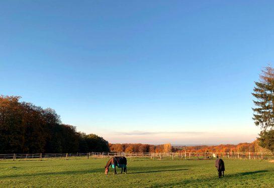 Wiese mit zwei Pferden, dahinter in der Ferne die Stadt, blauer Himmel