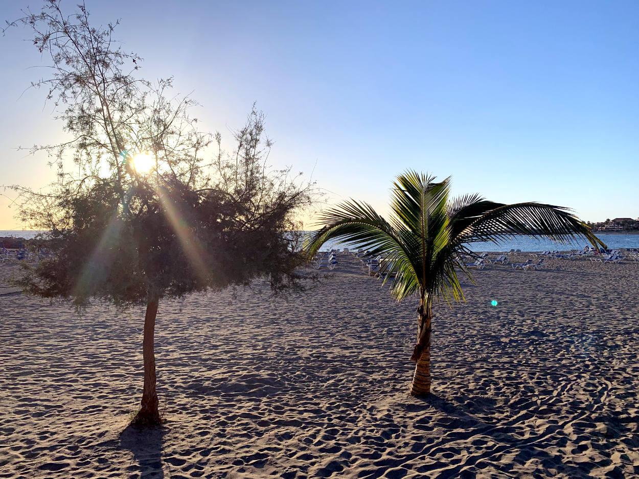 Strand, Palmen
