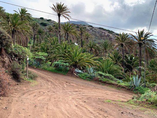 Steile, erdige Straße abwärts, im Hintergrund Palmen