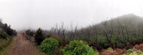 Weg runter vom Garajonay, links der Weg, rechts Baumgerippe und Unterholz