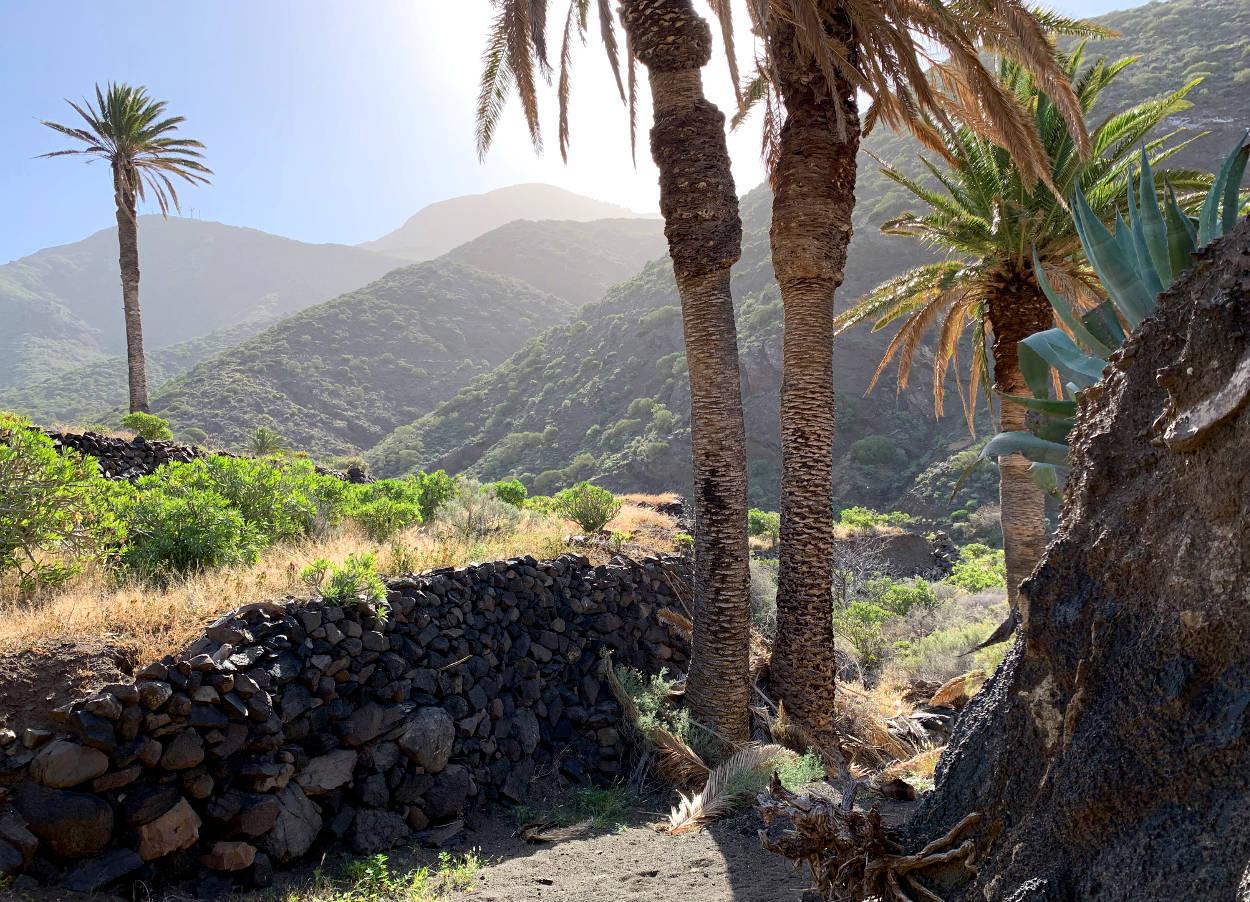 Palmen, dahinter Berge, ein Mäuerchen