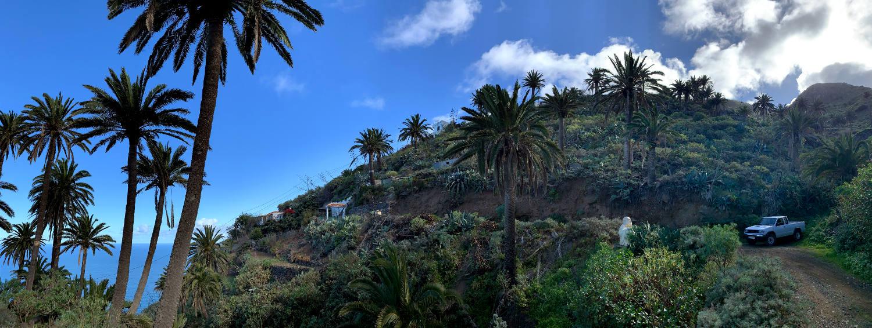 Dicht bewachsenes, Palmenbestandener Ort mit einer gewundenen Straße, an der ein Buddha steht