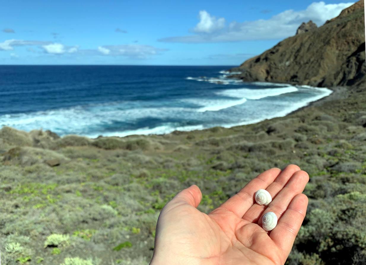 Hand mit zwei kleinen Schneckenschalen, dahinter das Meer
