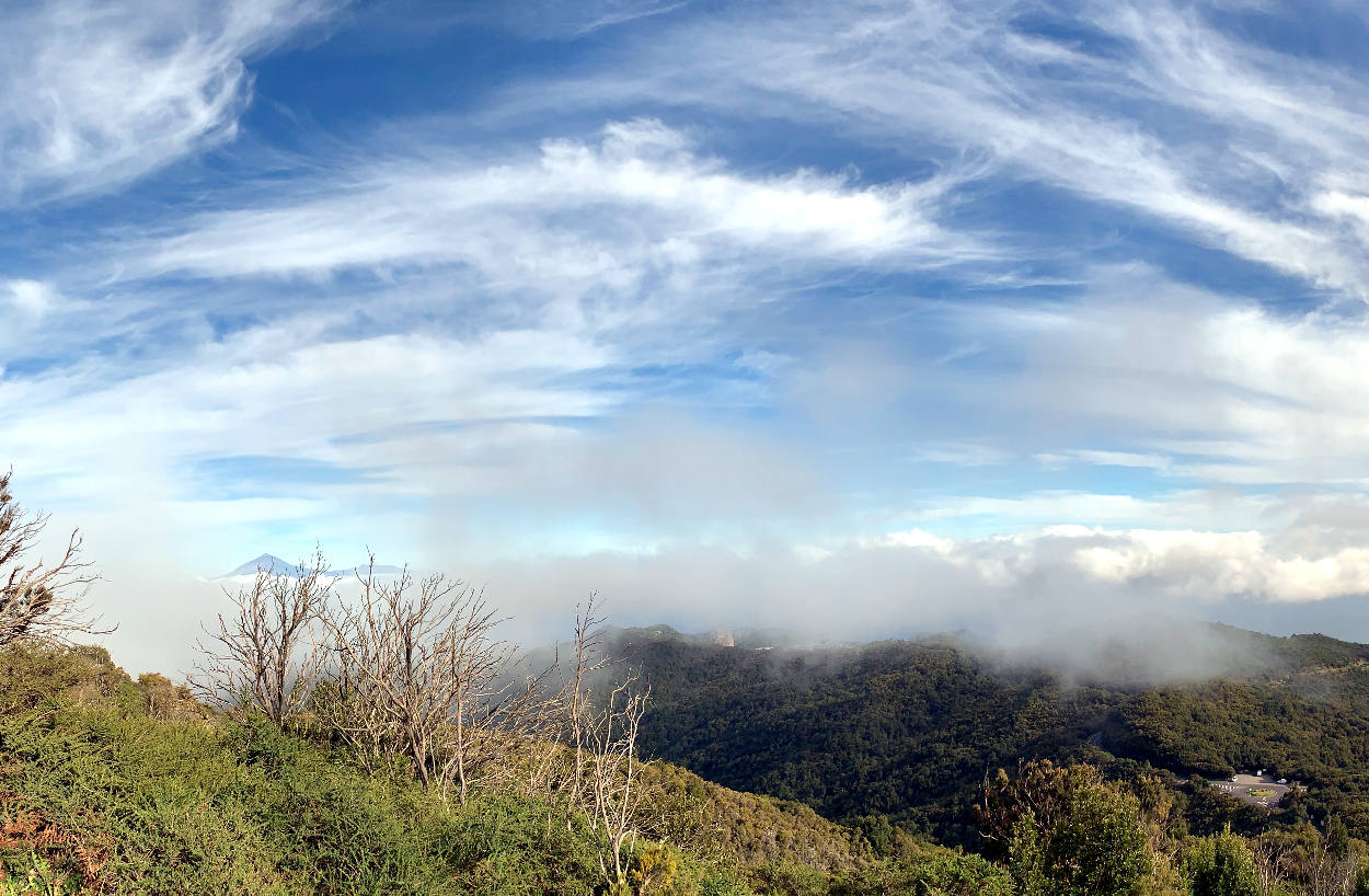 Wald, in der Ferne Teneriffa mit dem Teide, rechts unten ein grauer Fleck
