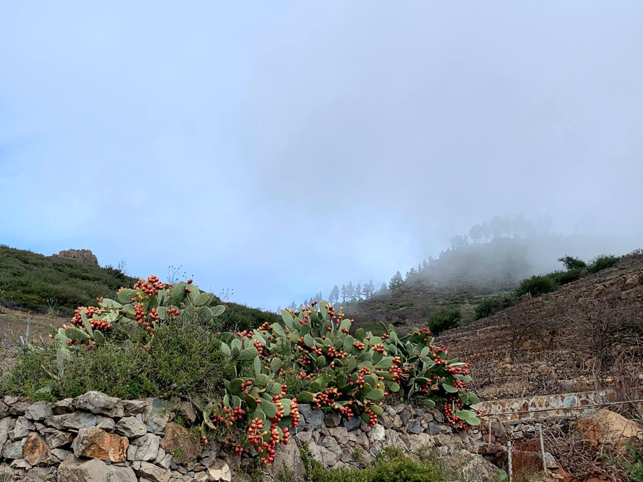 Kakteen an einer Steinwand, dahinter Bergkette mit Bäumen, Wolkenfetzen