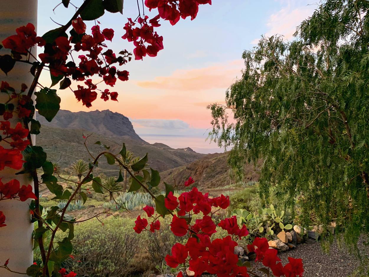 Blumen, im Hintergrund das Tal, alles in zartrosa bei Sonnenaufgang