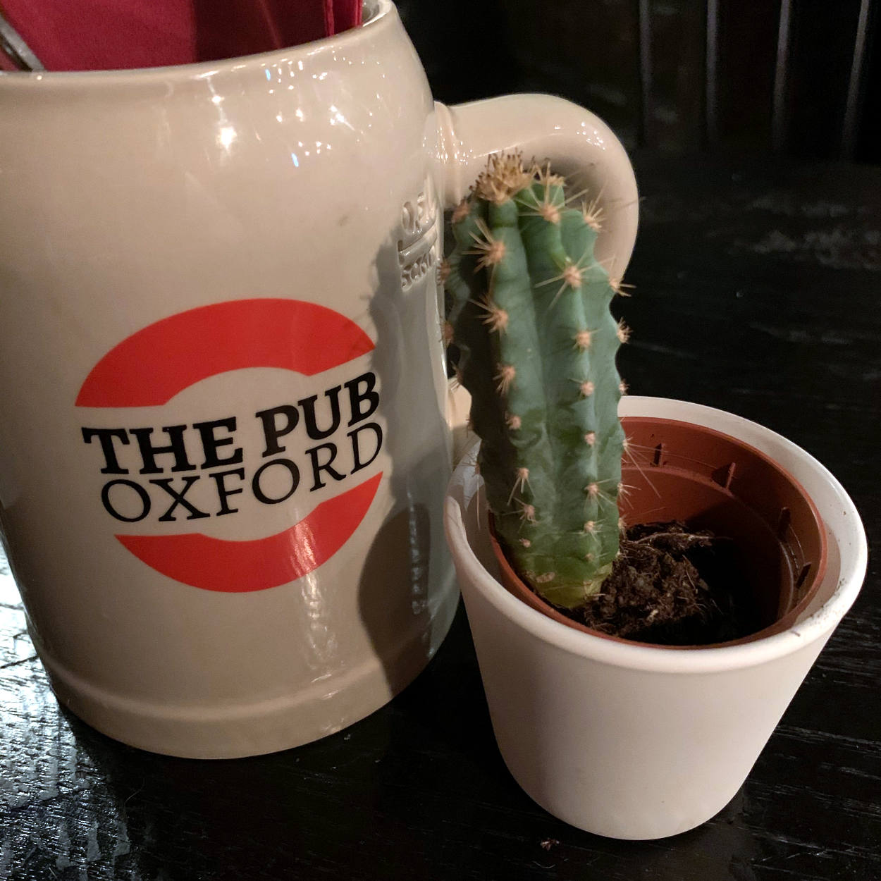 """Bierkrug mit Besteck, Aufschrift """"Oxford Pub"""", davor ein Kaktus"""