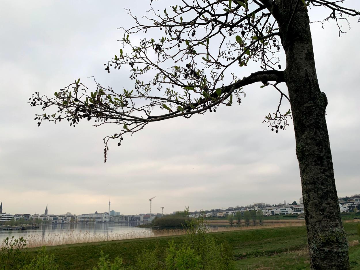 See mit Dortmunder Panorama, bewölkt, im Vordergrund ein Baum
