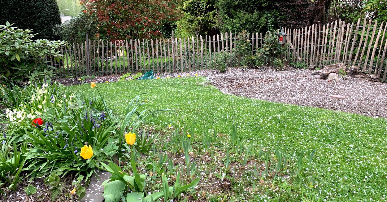 Weiße Blüttenblätter auf Rasen und Beet