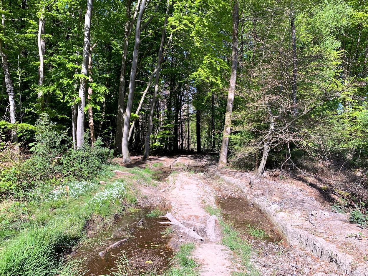 Robuster Waldweg