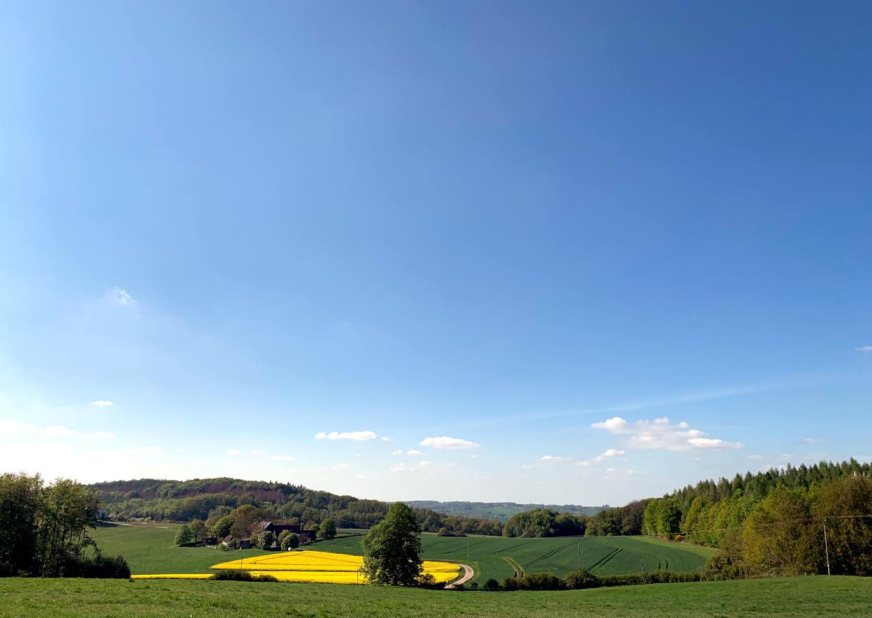 blauer Himmel, grüne Wiesen, Rapsfeld