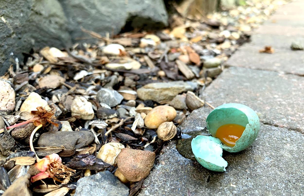 Kleines, grünes Ei - zerbrochen