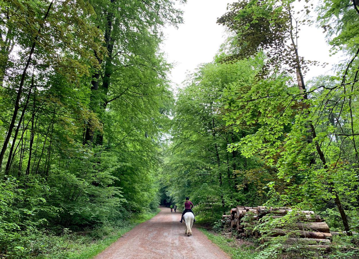 Reiterin von hinten auf einem weißen Pferd auf einem Waldweg