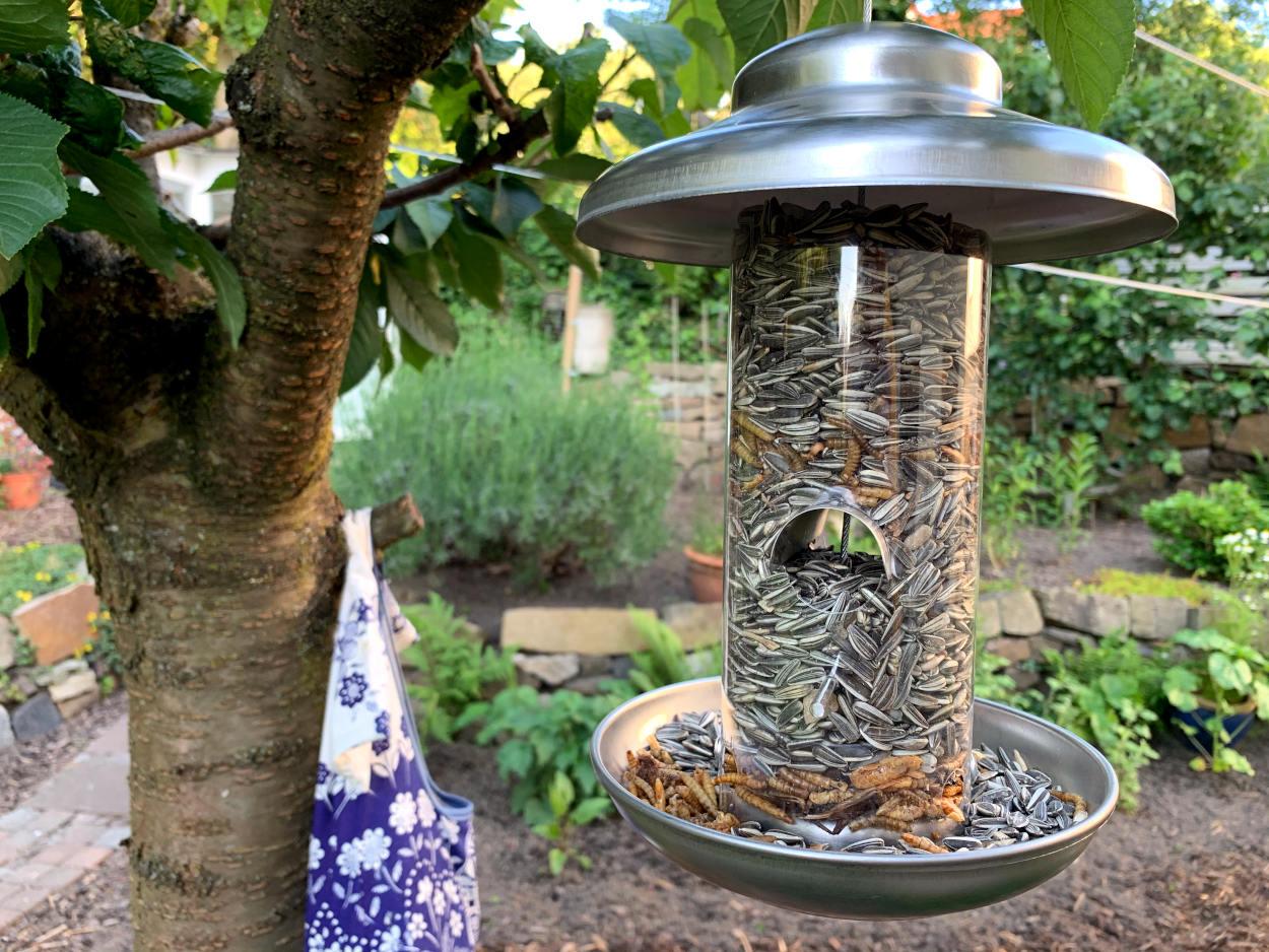 Futterstation zum Aufhängen im Kirschbaum, gefüllt mit Sonnenblumenkernen und Insekten