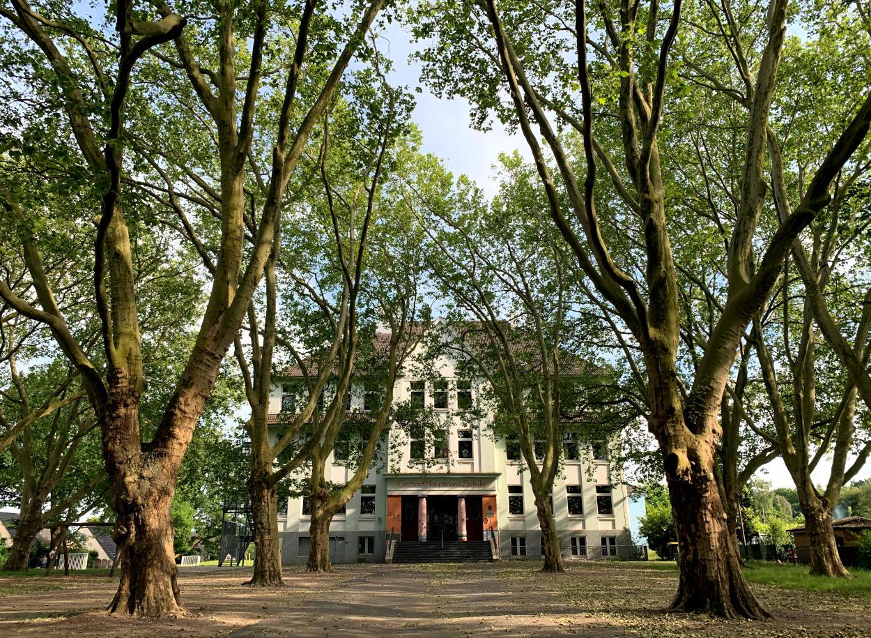 Schulgebäude, davor ein Schulfhof mit großen Bäumen