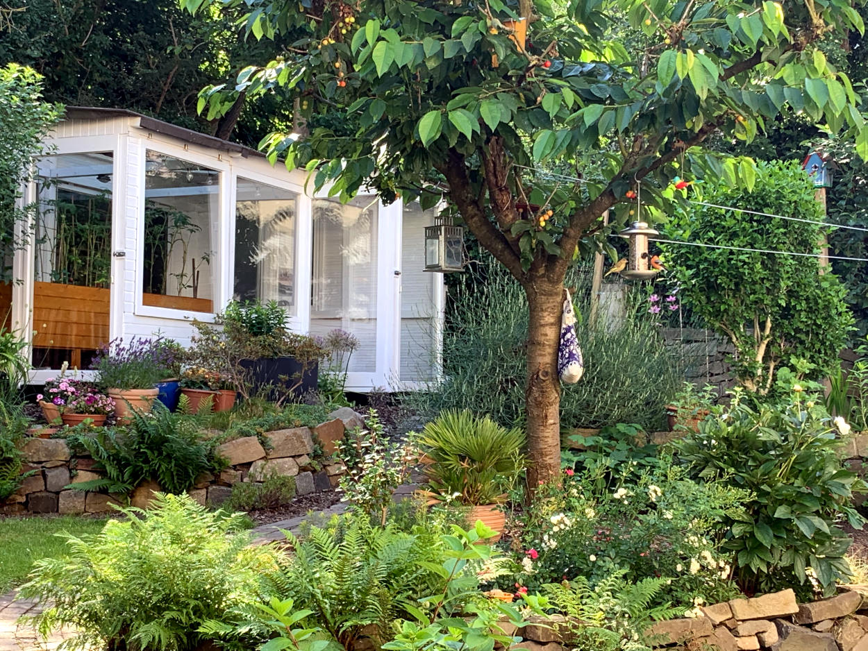 Üppiger gewachsener Garten. Im Hintergrund Gewächshaus. Davor Kirschbaum. Im Baum hängt eine Futterstation, auf der zwei Vögel sitzen.