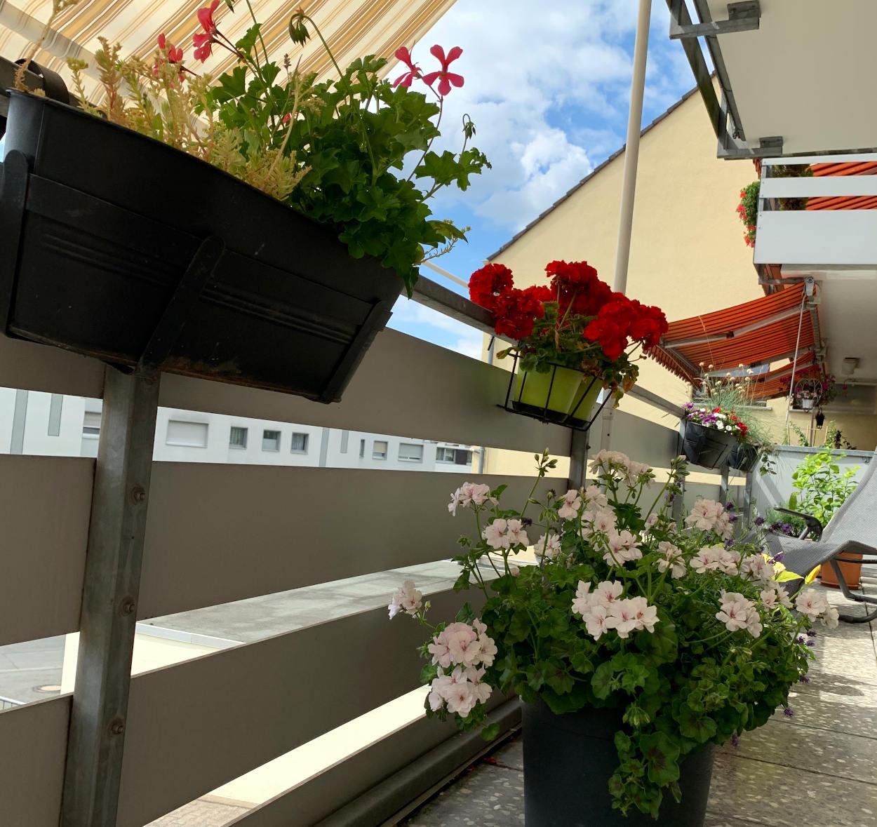 Balkon: Zahlreiche Blumen am Balkongeländer, auf dem Boden eine große Pelargonie