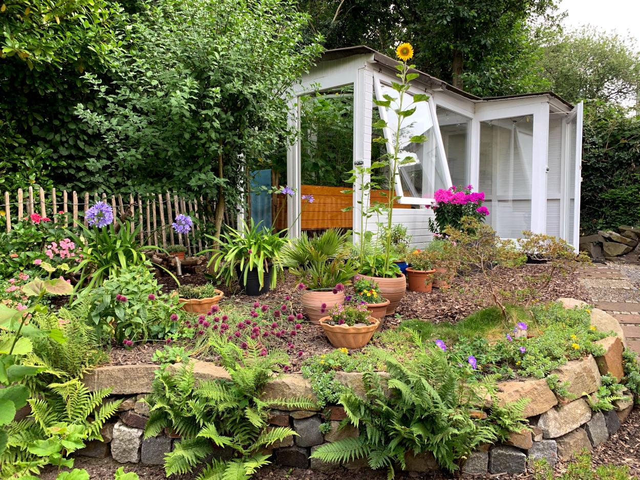 Garten, Steinmauer, dahinter gewächshaus. Davor einige Töpfe, einer mit Sonneblumen