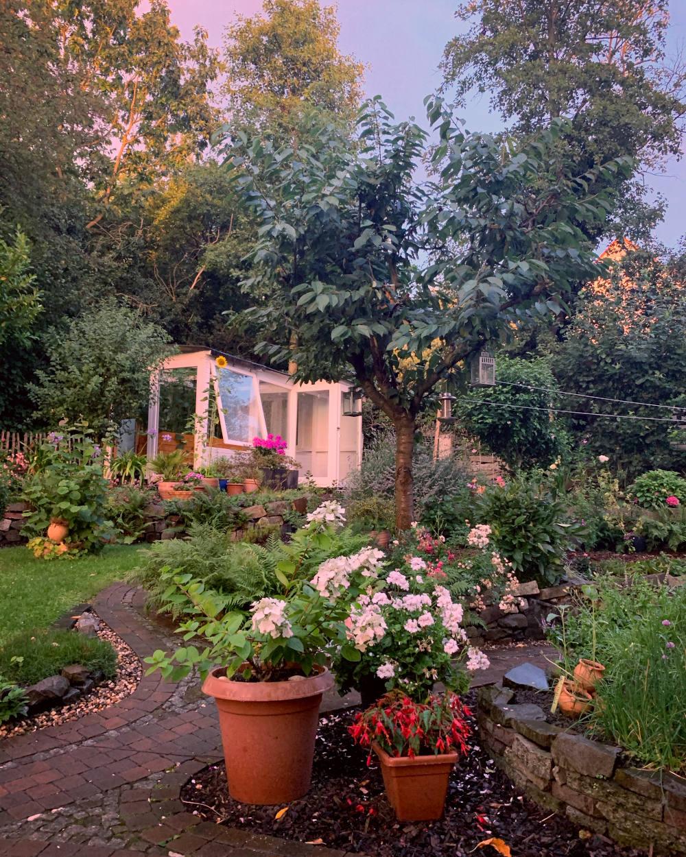 Garten mit rot-blauen Himmelsfarben im Sommerregen.