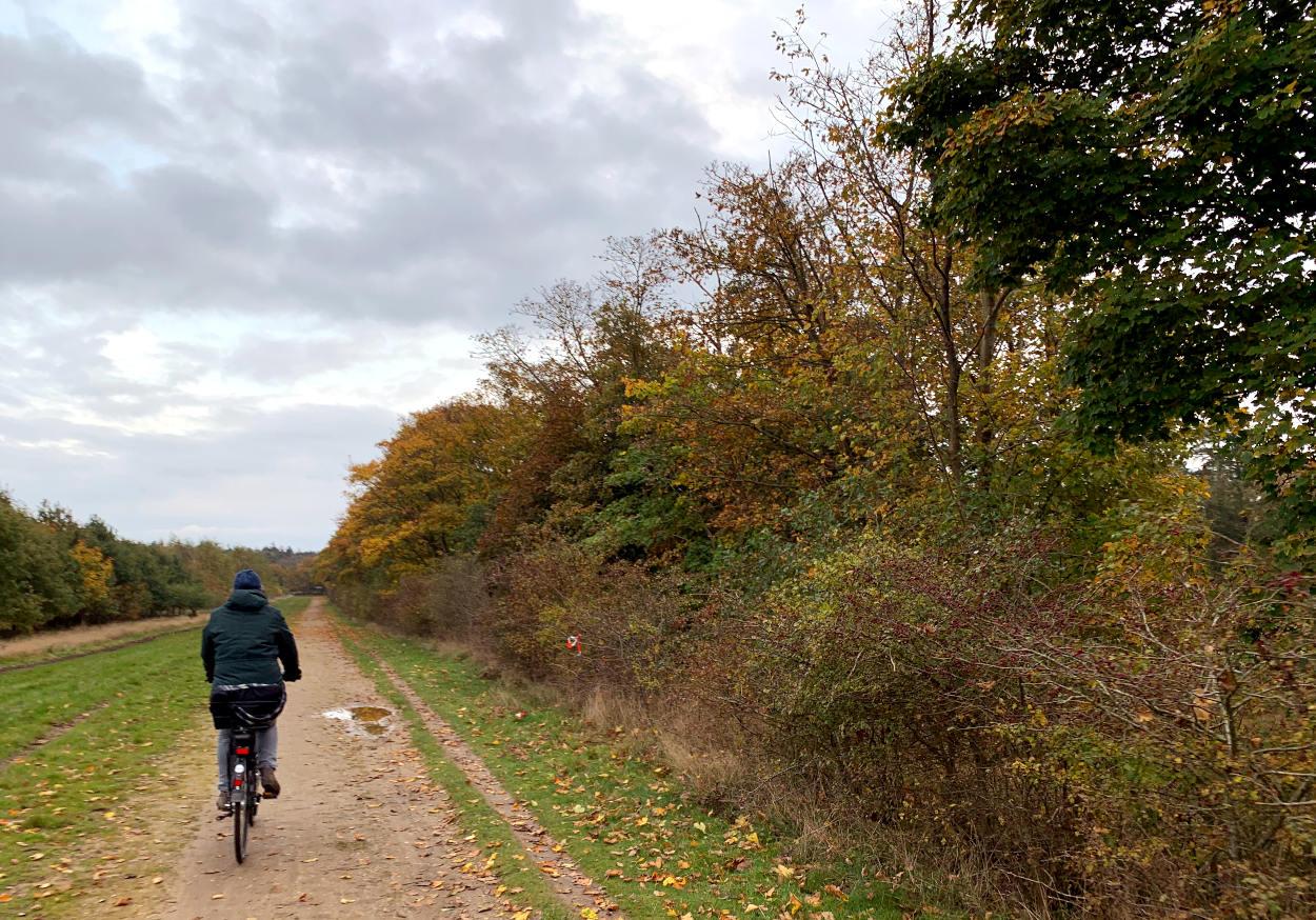 Frau auf einem Fahrrad, daneben herbstliches Gebüsch und Bäume