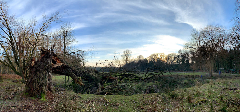 riesiger, abgeknickter Baum an einem kleinen Teich (Panoramabild)