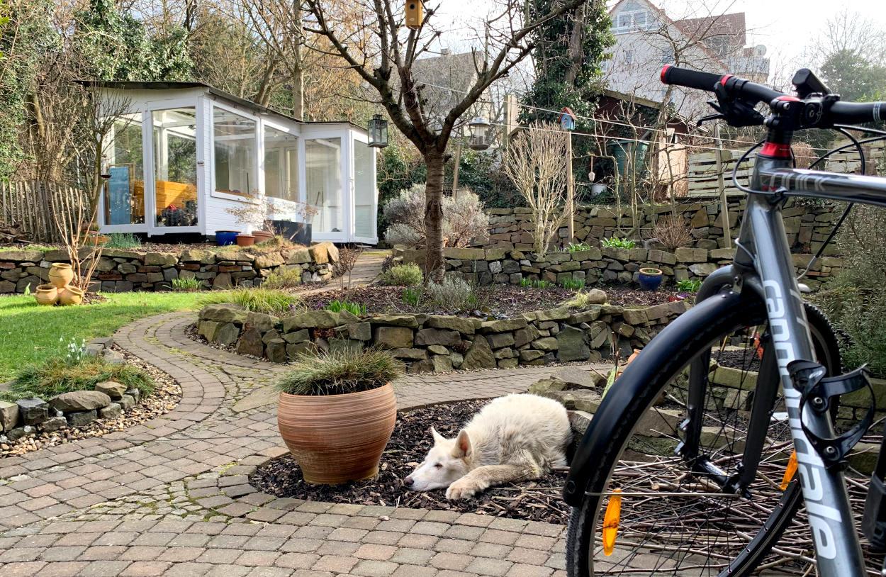 Garten mit Gewächshaus im Hintergrund. Im Vordergrund ein Fahrrad und ein schlafender Hund.