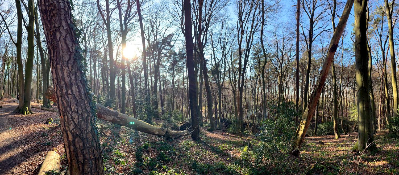 Panoramafoto aus dem Wald mit Sonne im Gegenlicht