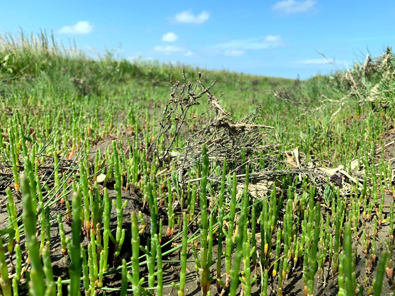 Grüne Stängel im Sand