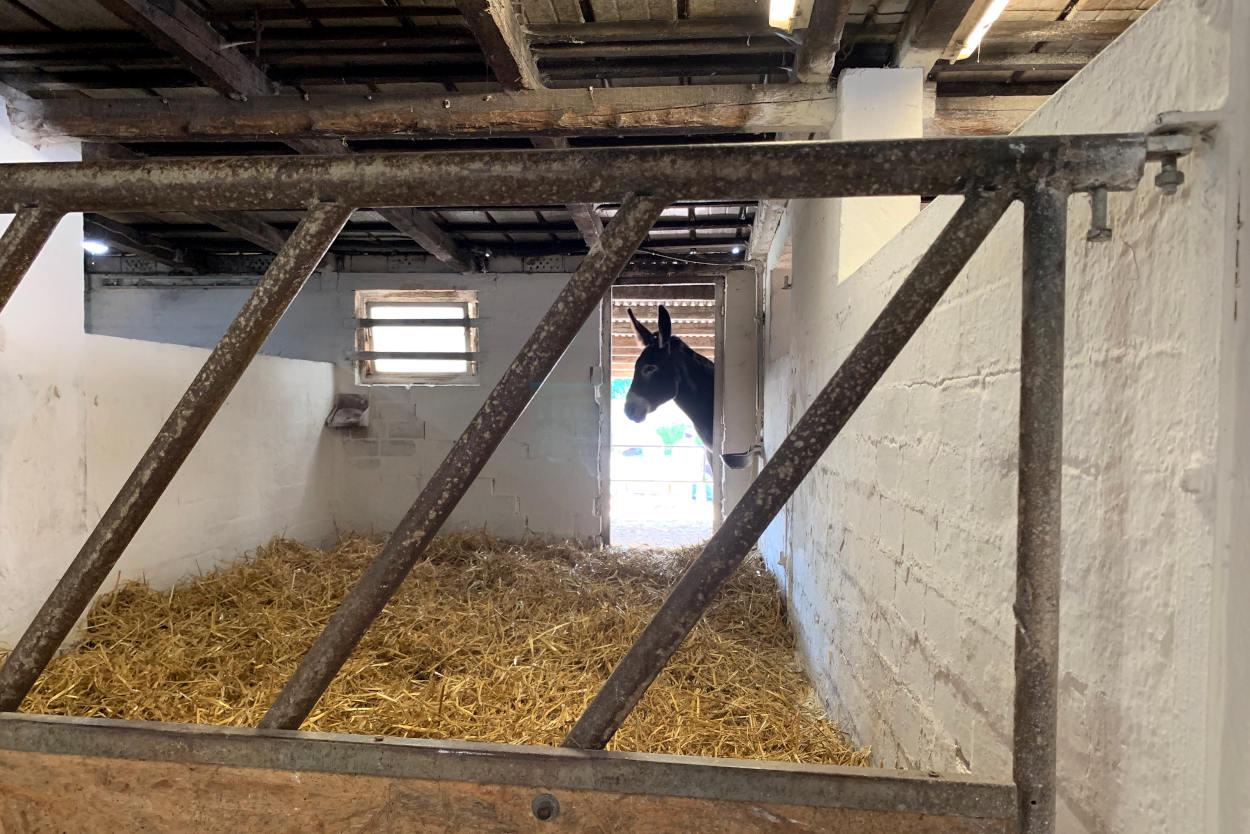 Stall mit einem Esel