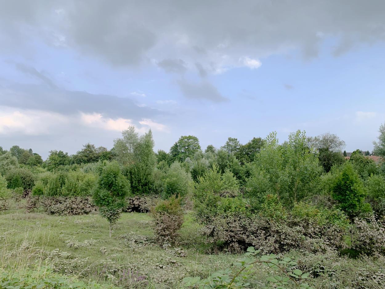 Büsche und Bäume auf einer Wiese, im unteren Teil braun vom Schlamm