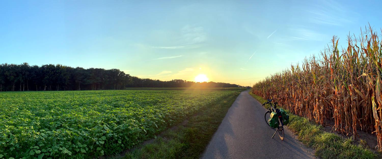 Sonnenuntergang: Maisfeld, Fahrrad mit Satteltaschen und ein grünes Feld