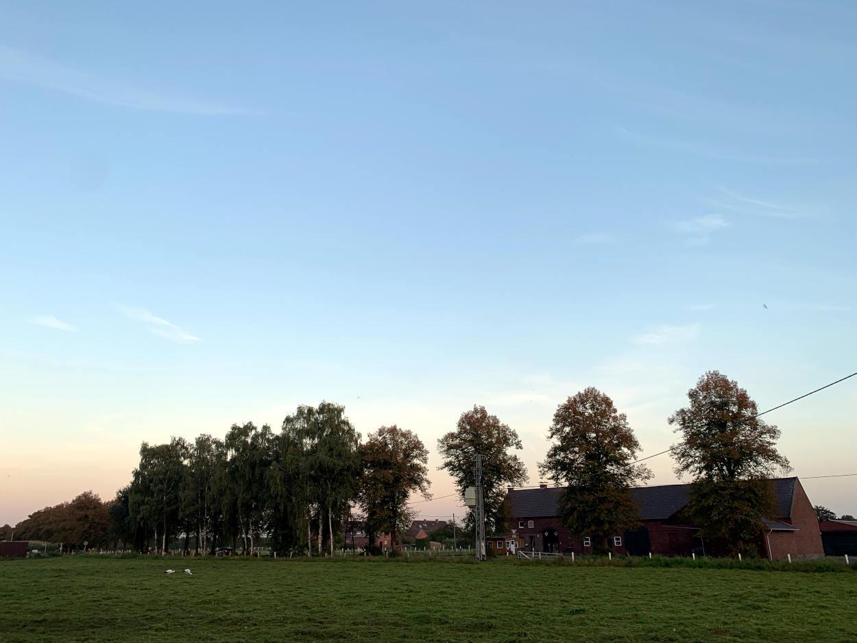 Landschaft mit Wiese und Bauernhof, auf der Wiese ein Storchenpaar